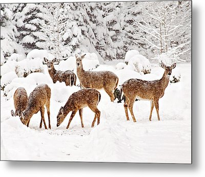 Metal Print featuring the photograph Deer In The Snow 2 by Angel Cher