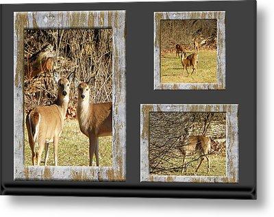 Deer Lovers Metal Print