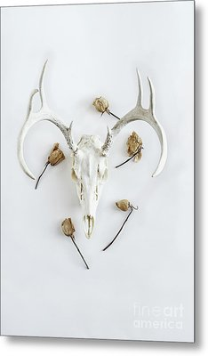 Metal Print featuring the photograph Deer Skull With Antlers And Roses by Stephanie Frey