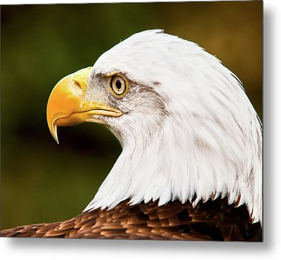 Defiance Metal Print by Ron  McGinnis