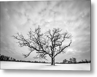 Metal Print featuring the photograph Delaware Park Winter Oak by Chris Bordeleau