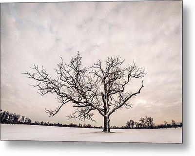 Delaware Park Winter Oak - Color Metal Print by Chris Bordeleau