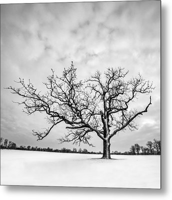 Metal Print featuring the photograph Delaware Park Winter Oak - Square by Chris Bordeleau