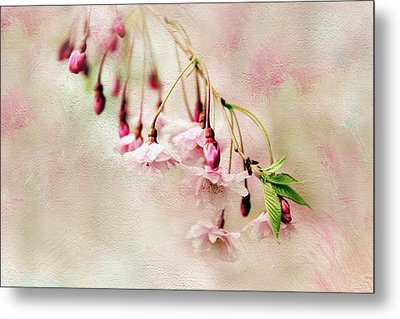 Metal Print featuring the photograph Delicate Bloom by Jessica Jenney