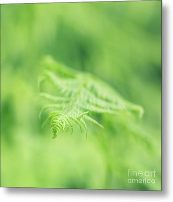 Delicate Fern - Hipster Photo Square Metal Print by Charmian Vistaunet