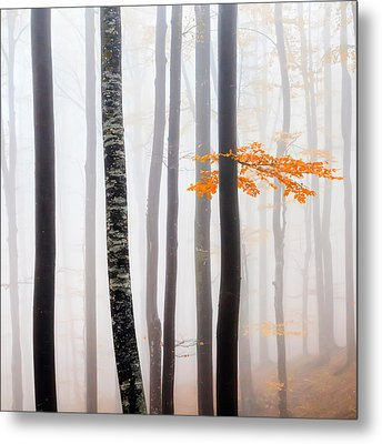 Delicate Forest Metal Print by Evgeni Dinev