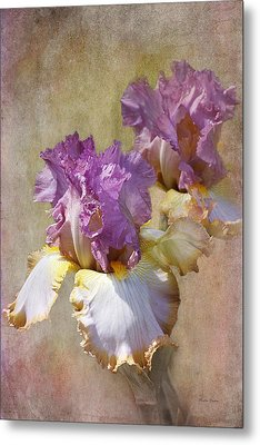 Delicate Gold And Lavender Iris Metal Print by Phyllis Denton