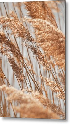 Metal Print featuring the photograph Delicate Grasses In Spring by Christine Amstutz