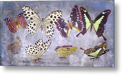 Delicate Peaceland Metal Print by Betsy Knapp