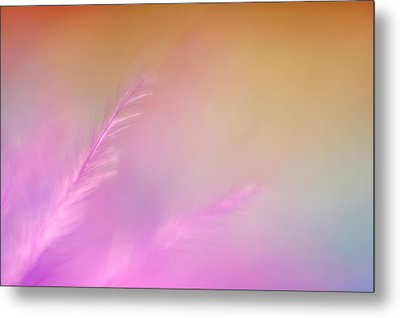 Delicate Pink Feather Metal Print