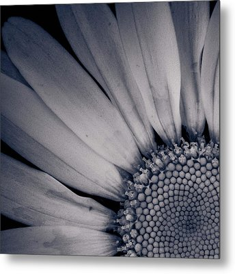 Delicate Ratio Metal Print by Adam Smith