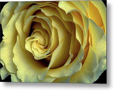 Delicate Rose Petals Metal Print by Deborah Klubertanz