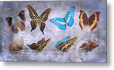 Delicate Tranquility Metal Print by Betsy Knapp