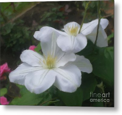 Metal Print featuring the painting Delicate White Clematis Pair by Smilin Eyes  Treasures