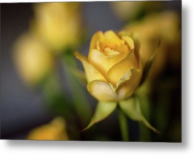 Metal Print featuring the photograph Delicate Yellow Rose  by Terry DeLuco