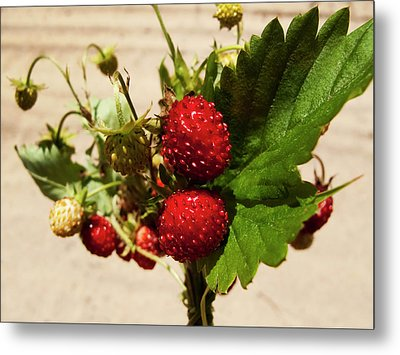 Delicious Wild Strawberry Metal Print by Nat Air Craft