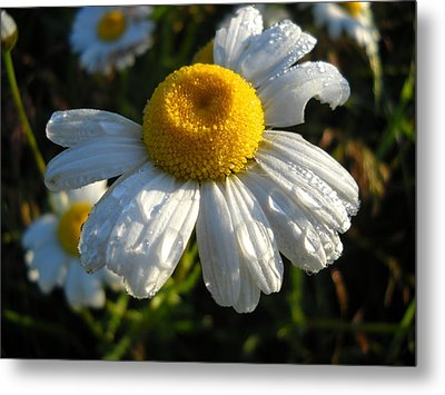 Delightful Dew Drops Metal Print