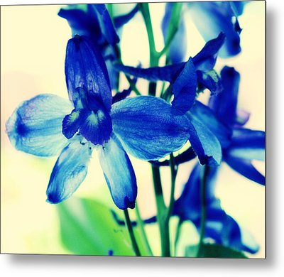 Delphinium Metal Print by Cathie Tyler
