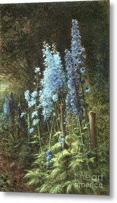 Delphiniums In A Wooded Landscape Metal Print