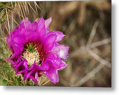 Desert Bloom Metal Print by Anthony Citro
