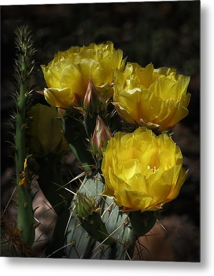Desert Blooming Metal Print