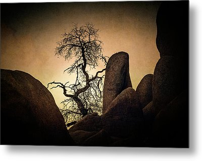 Desert Bonsai II Metal Print