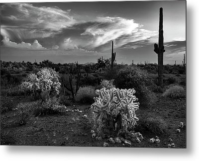 Metal Print featuring the photograph Desert Cactus Black And White by Dave Dilli