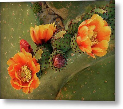 Metal Print featuring the photograph Desert Flame by Lucinda Walter
