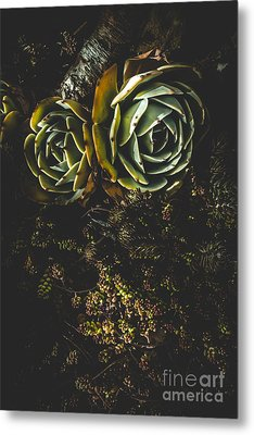 Desert Flowers Metal Print by Jorgo Photography - Wall Art Gallery