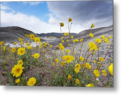 Metal Print featuring the photograph Desert Gold In Death Valley by Dung Ma