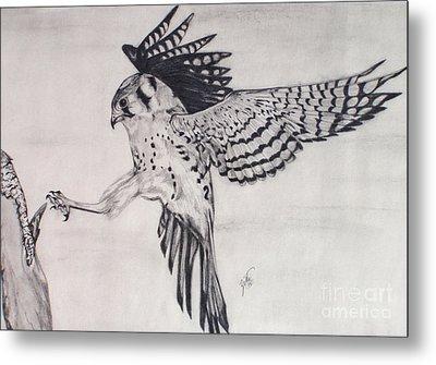 Falcon I Metal Print by Suzette Kallen