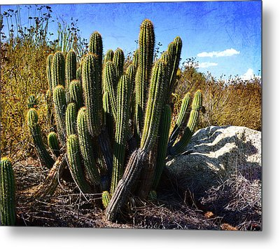 Metal Print featuring the photograph Desert Plants - The Wild Bunch by Glenn McCarthy