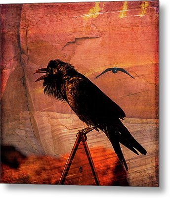 Metal Print featuring the photograph Desert Raven by Mary Hone