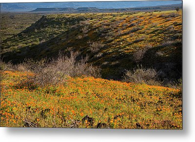 Metal Print featuring the photograph Desert Spring Flowers by Dave Dilli