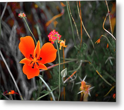 Desert Wildflowers Metal Print by Penny Lisowski