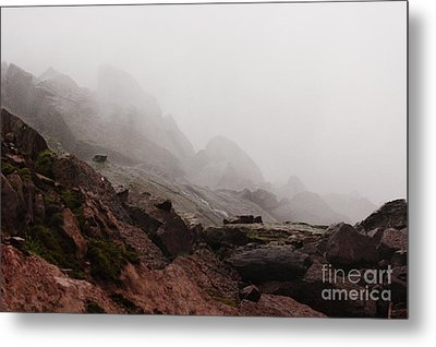 Metal Print featuring the photograph Still Untouched By Men by Dana DiPasquale
