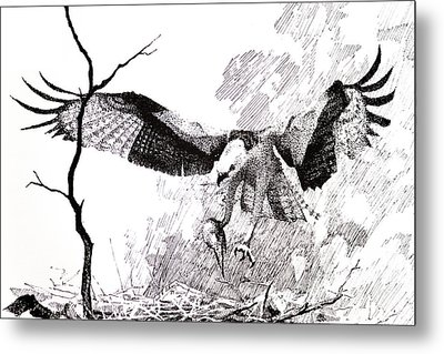 Detail From Osprey Metal Print by Paul Illian