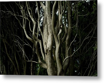 Detailed View Of The Branches Of A Tree Metal Print by Todd Gipstein