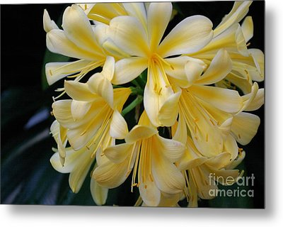 Details In Yellow And White Metal Print by John S