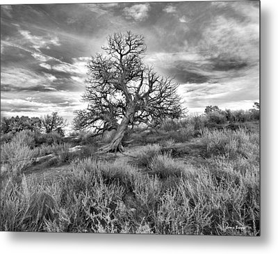 Devils Canyon Tree Metal Print