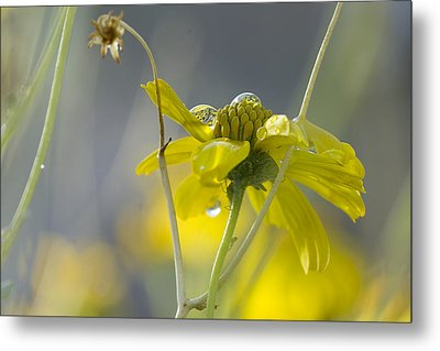 Dew On A Desert Bloom Metal Print