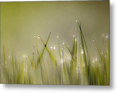 Dew On Grass Metal Print