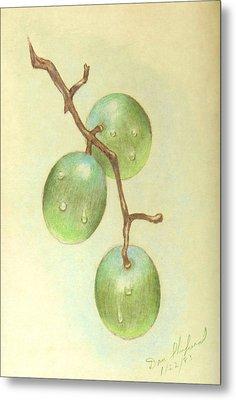 Dew On White Grapes Metal Print by Daniel Shuford