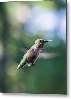 Hummingbird In Flight 3 Metal Print