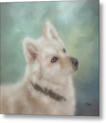 Metal Print featuring the mixed media Diamond, The White Shepherd by Colleen Taylor