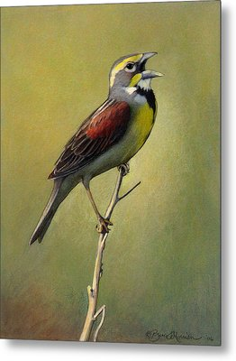 Dickcissel Summer Song Metal Print by Bruce Morrison