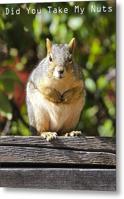 Metal Print featuring the photograph Did You Take My Nuts by James Steele