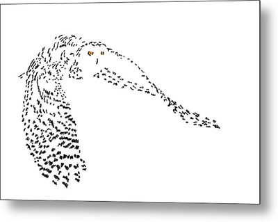 Digital Scribble - Snowy Owl II Metal Print by Nathan Shegrud