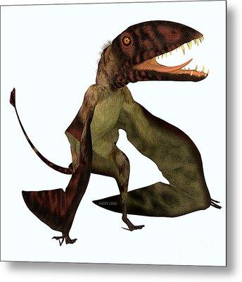Dimorphodon Pterosaur Metal Print by Corey Ford