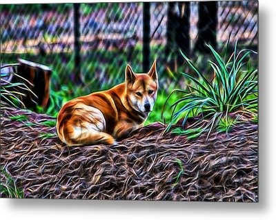 Dingo From Ozz Metal Print by Miroslava Jurcik